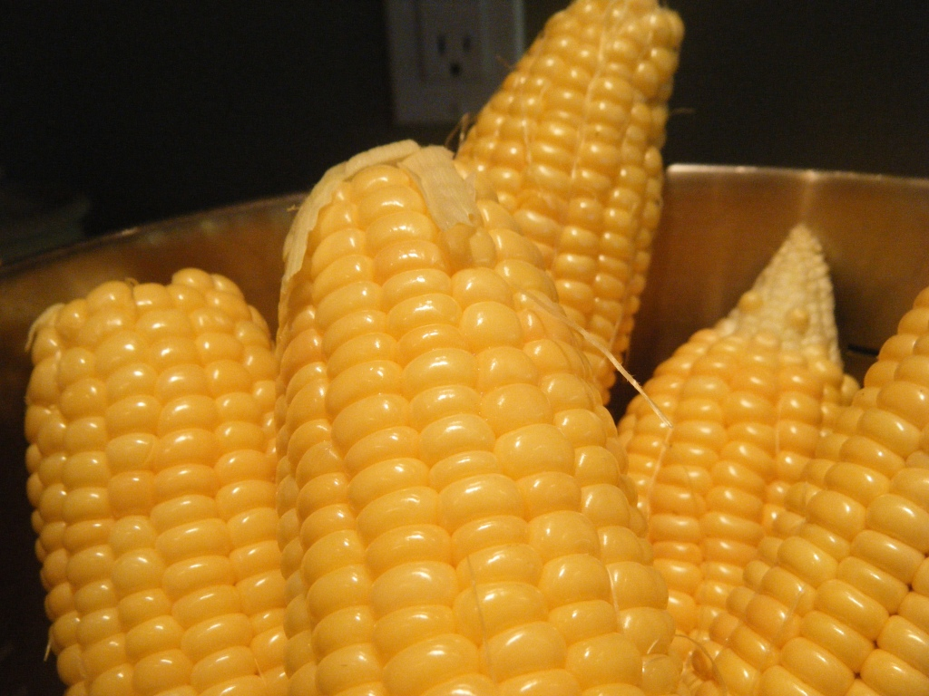 Golden Jubilee Corn