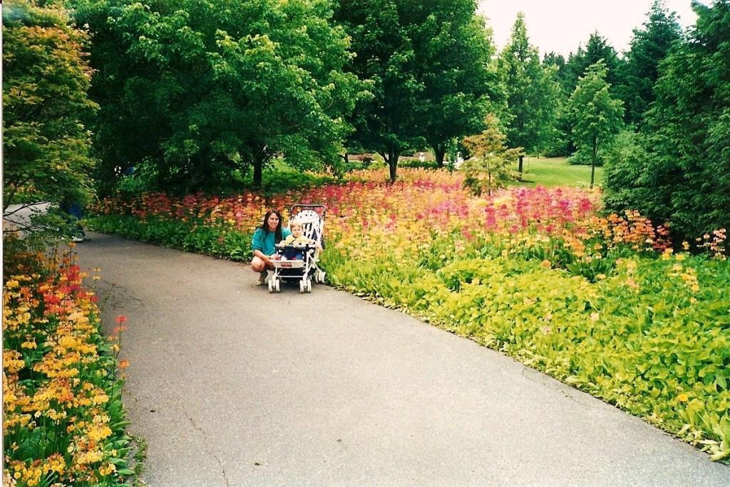 Primula bulleesiana at Van Dusen Gardens