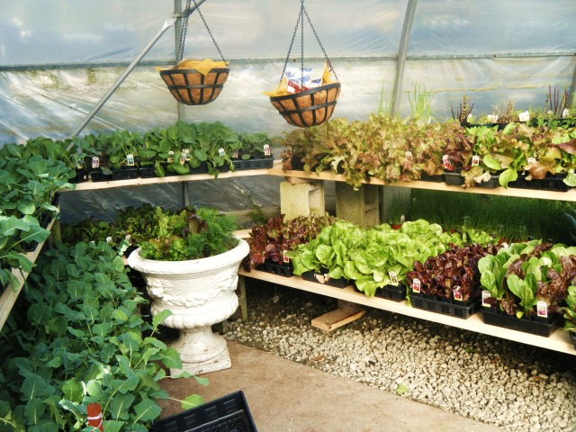 Delicious fresh vegetables - ready to plant in your garden