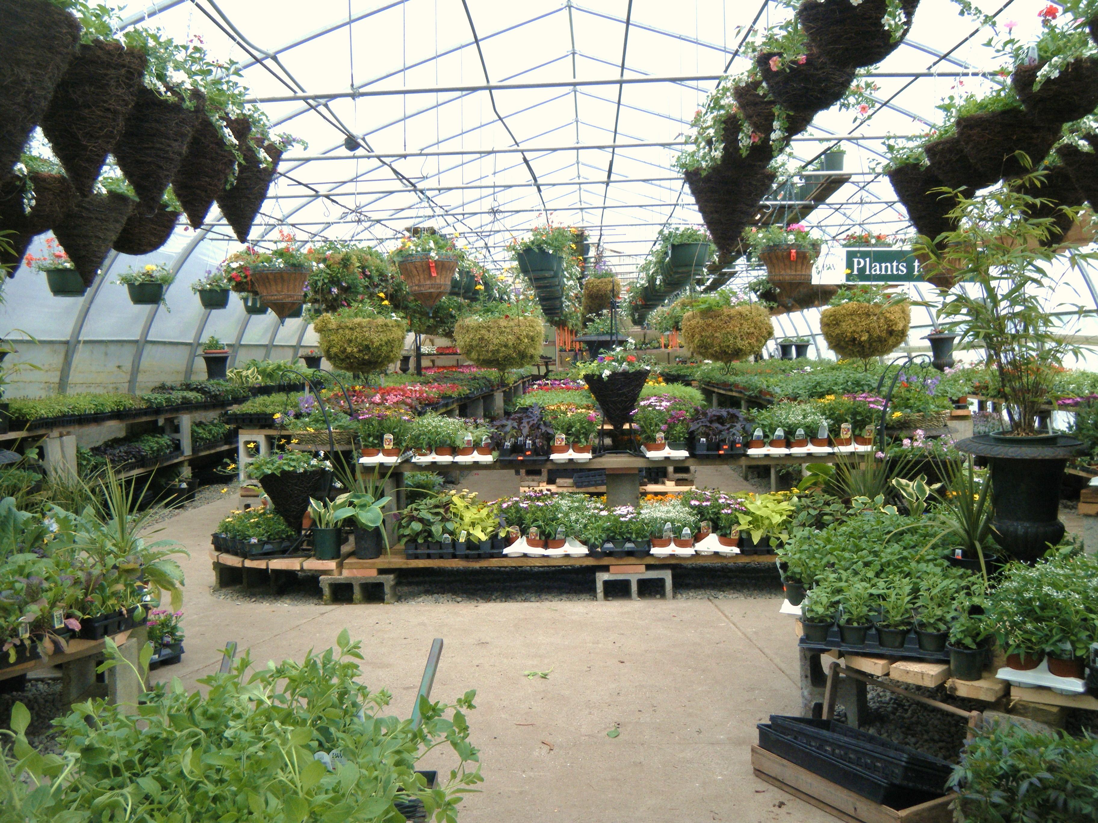 Lucky Me Hortophile My New Garden