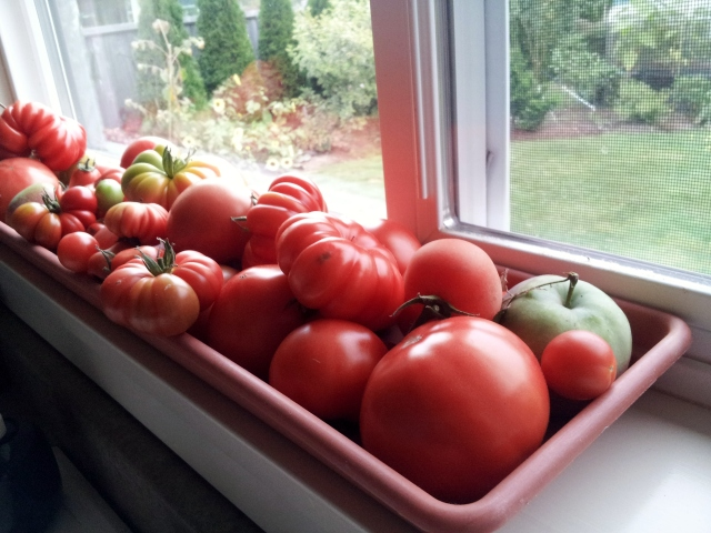 Tomatoes ripening on my windowsill