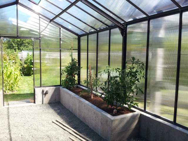 tomatoes and peppers in the greenhouse
