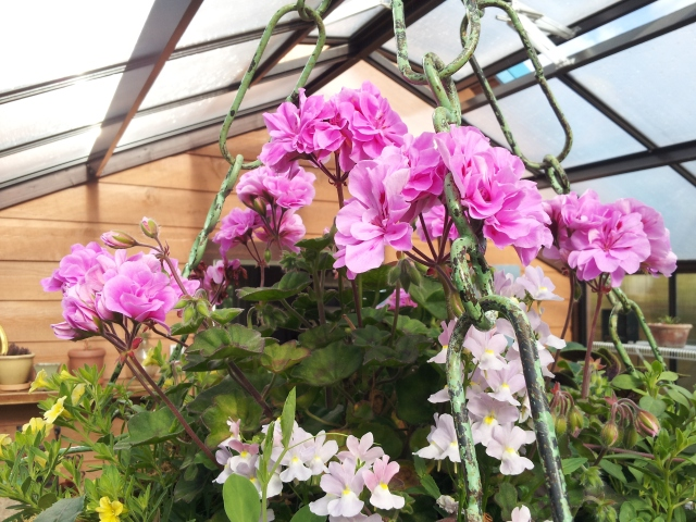 Hanging basket blossoms